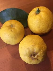 庭でなった柚子